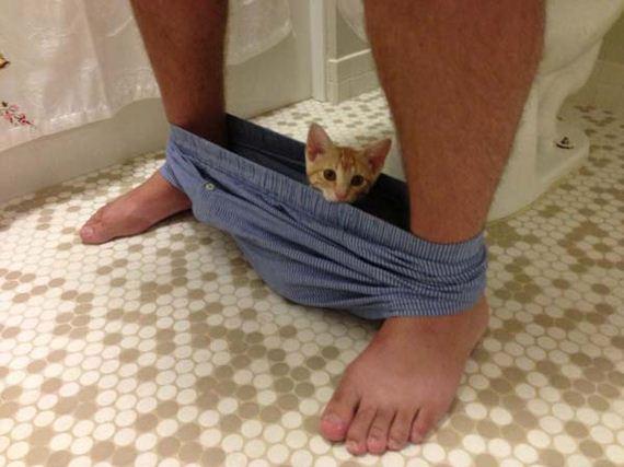 bathroom-pets1