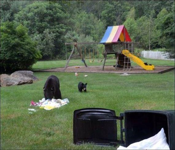 bears_play_on_slide
