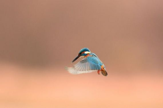 beautiful_bird_pictures