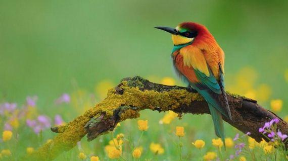 beautiful_bird_pictures