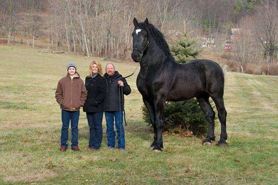 biggest-animals