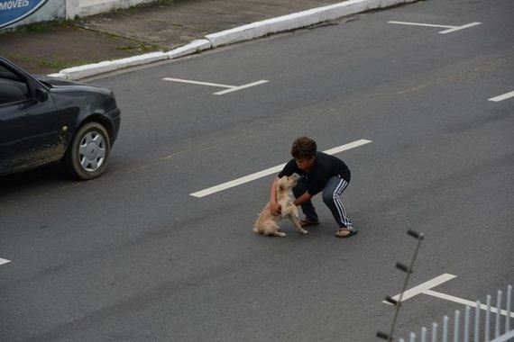 boy_gets_into_traffic_to_help_dog_that_was_hit