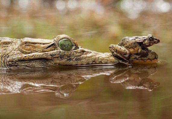 brave_frog