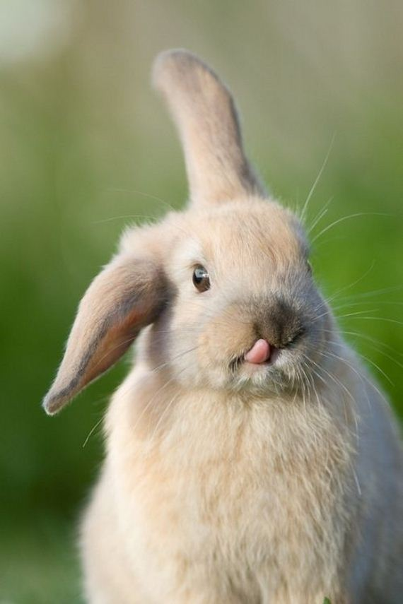 bunny_tongues_that_will_melt_your_heart
