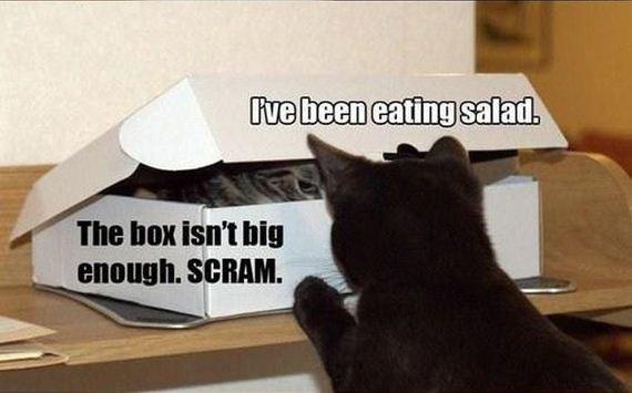 cat_in_the_box