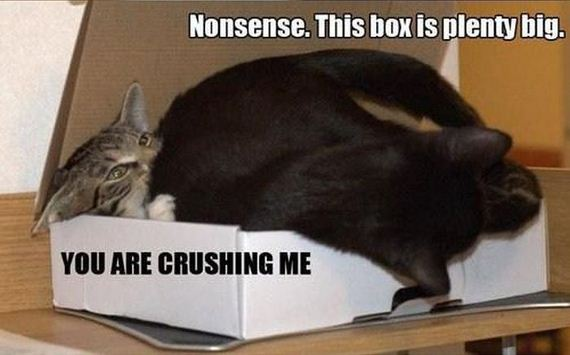 cat_in_the_box