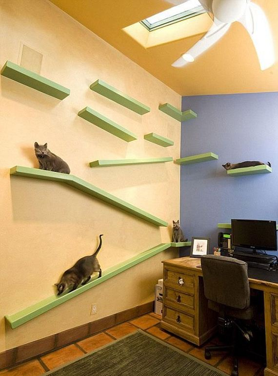 cat_paradise_home