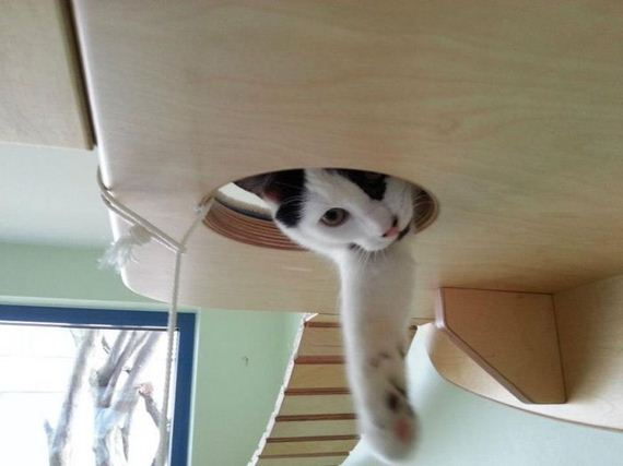 cat_playground_room