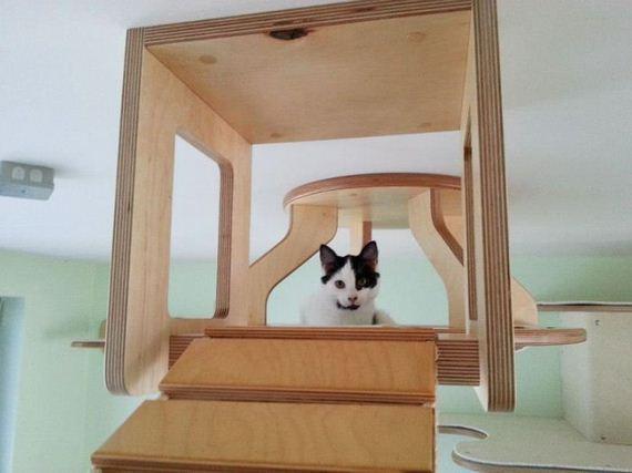 cat_playground_room