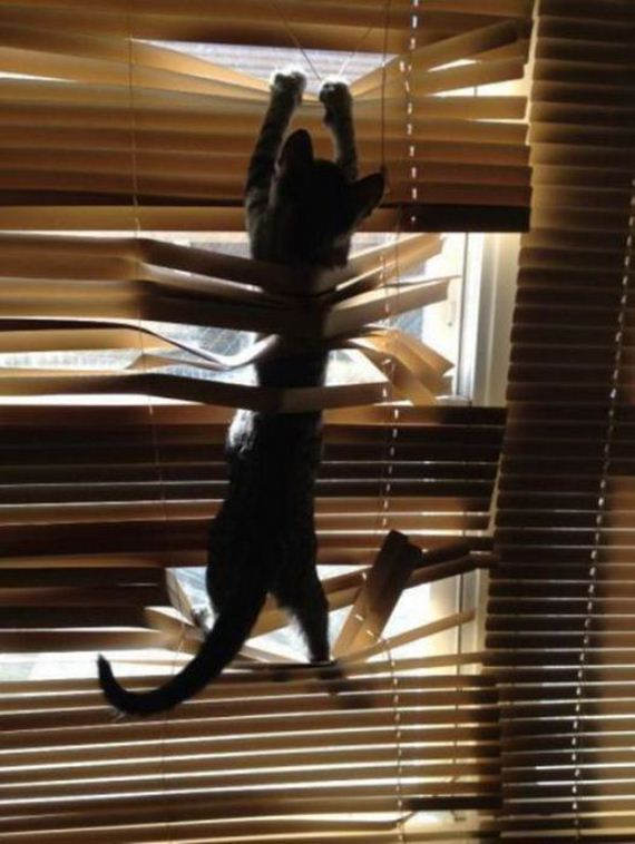 cats_vs_blinds