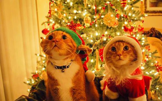 christmas-cats-013