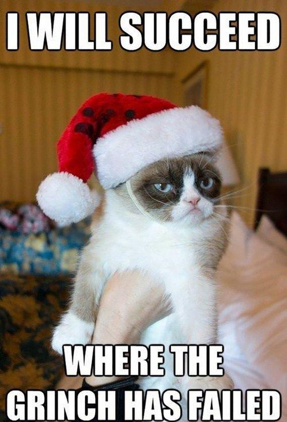 christmas-cats-013
