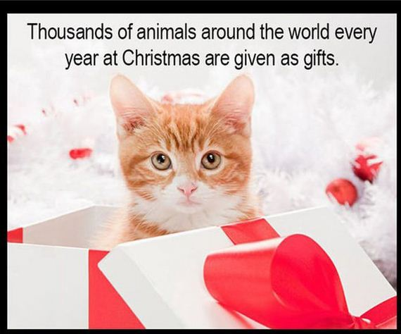 christmas_kitten_rescue_cat_dog