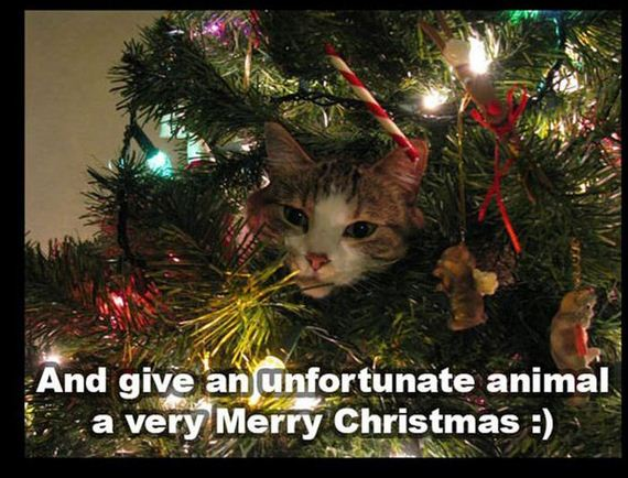 christmas_kitten_rescue_cat_dog