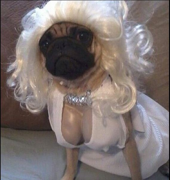 costumes-that-prove-pugs