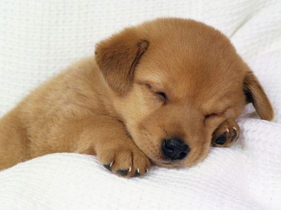 cute_dogs