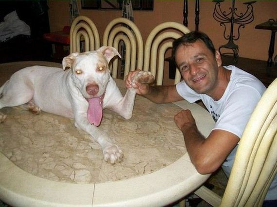 dog_rescue