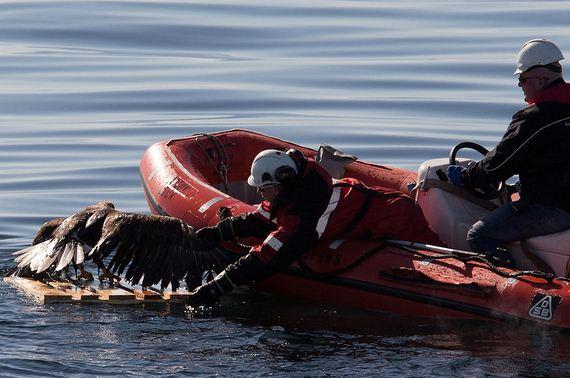 drowning_eagle_saved