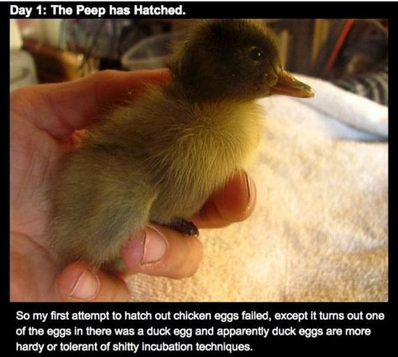 epic_beard_saved_ducklings_life