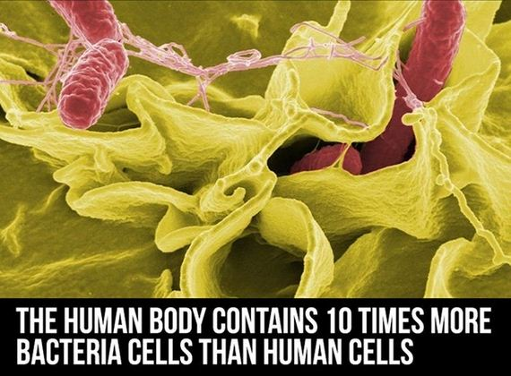 facts_about_the_human_body