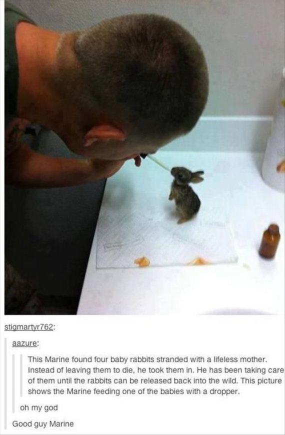 faith_in_humanity_animals