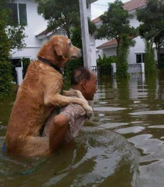 faith_in_humanity_animals