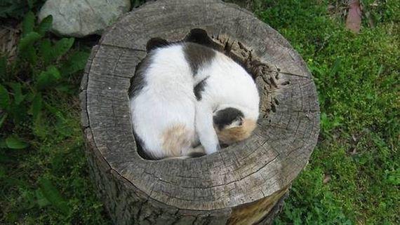 fits_i_sits_cats