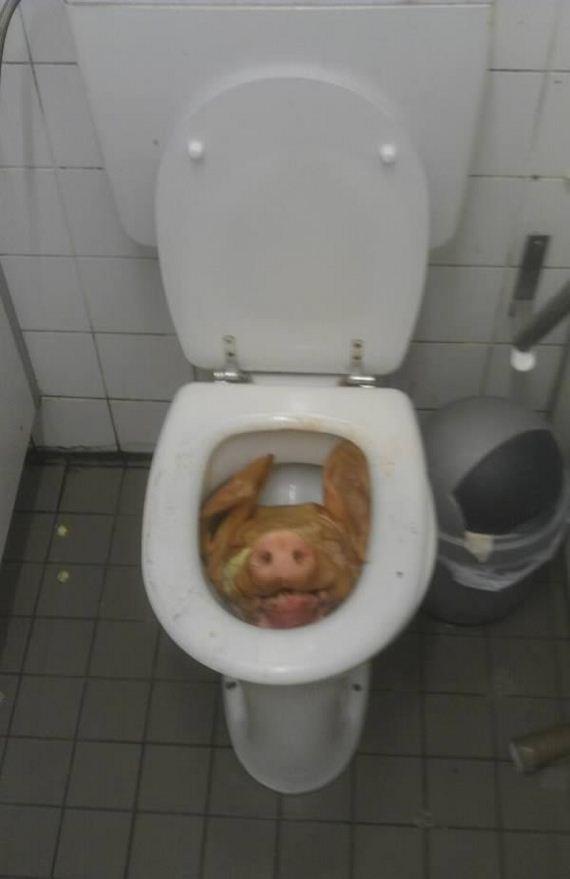 found-in-toilet_7-possum