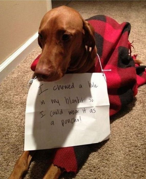 funny-pictures-564