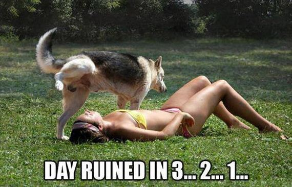 funny-pictures-589