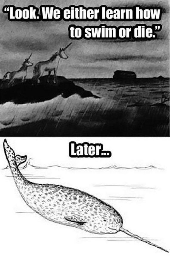 funny-pictures-591