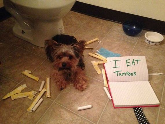funny-pictures-605