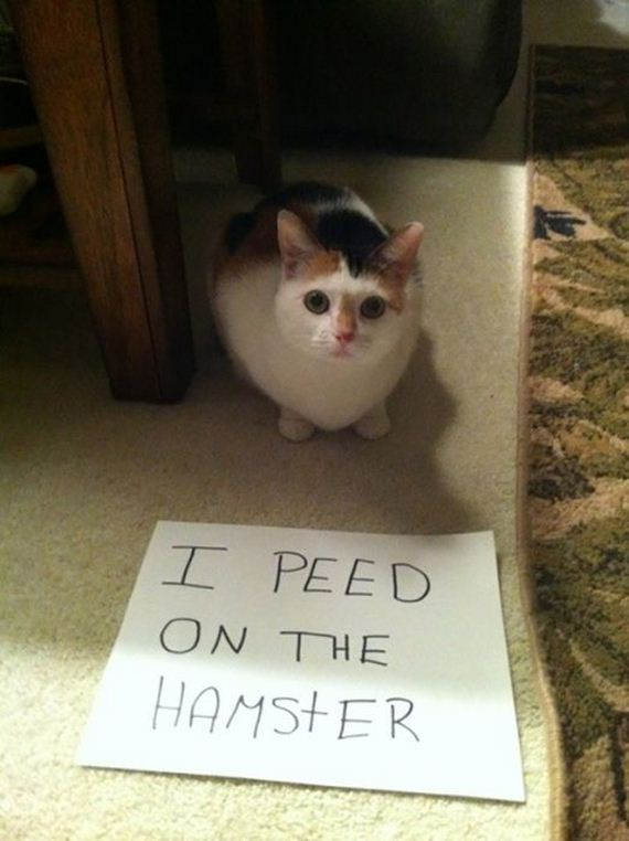 funny-pictures-622
