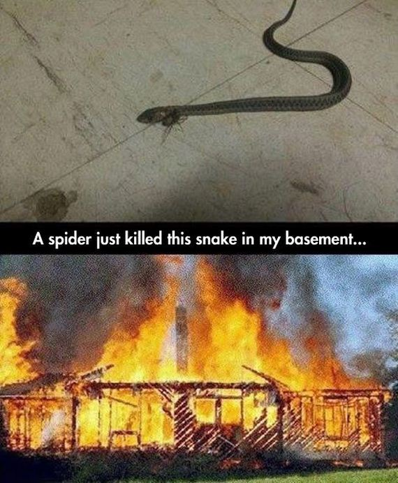 funny-pictures-630