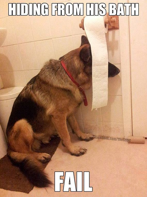 funny-pictures-636