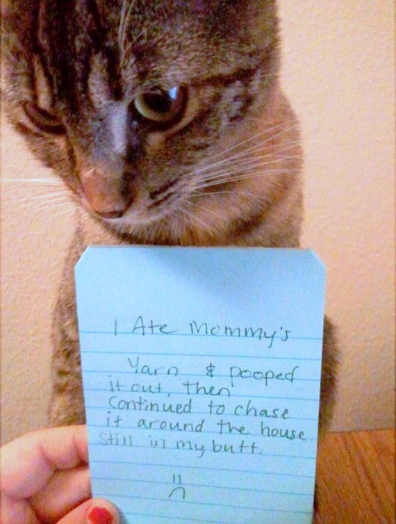 funny-pictures-648
