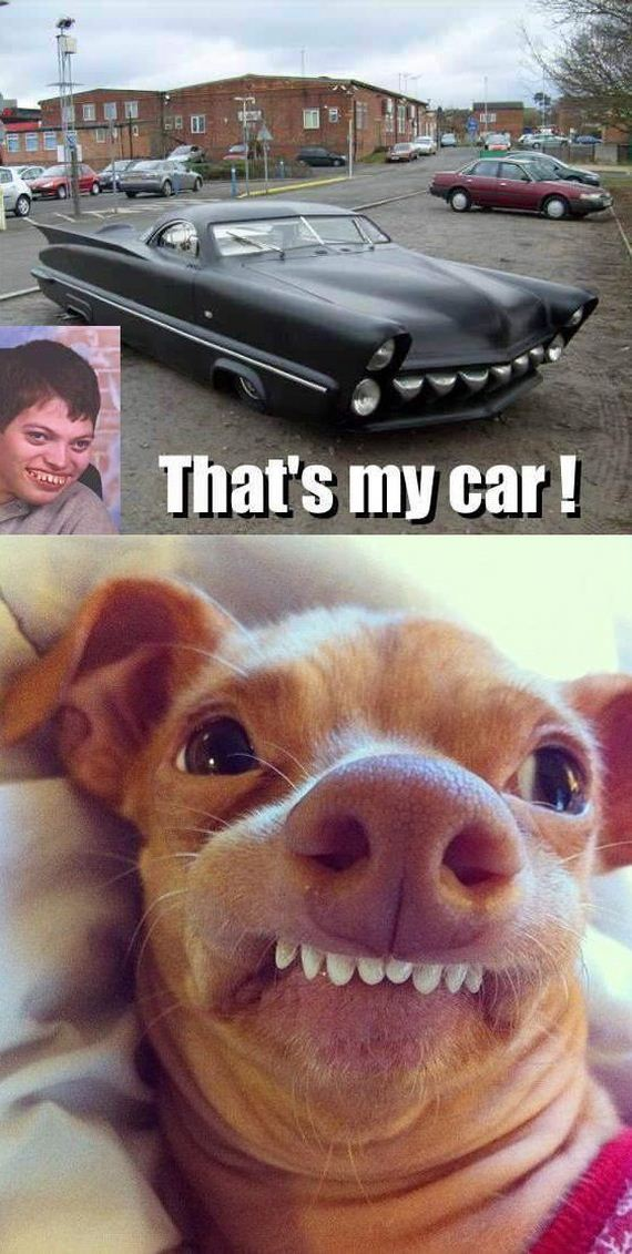 funny-pictures-655