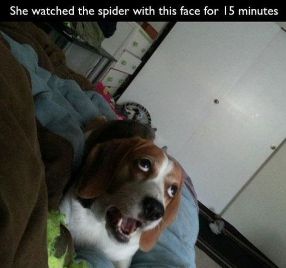 funny-pictures-675