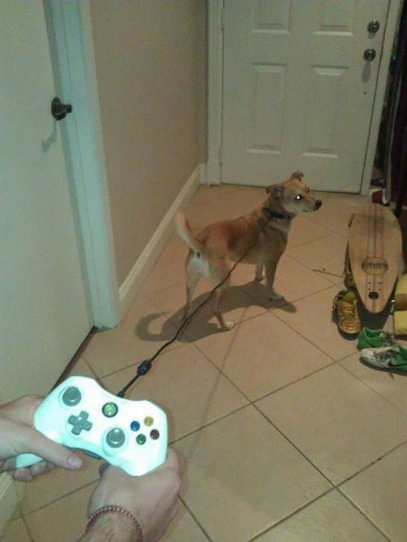 funny-pictures-714