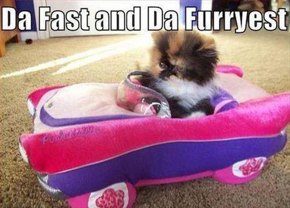 funny_puns