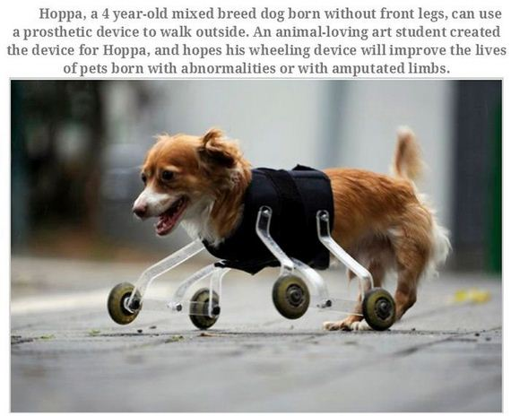 handicapped_animals