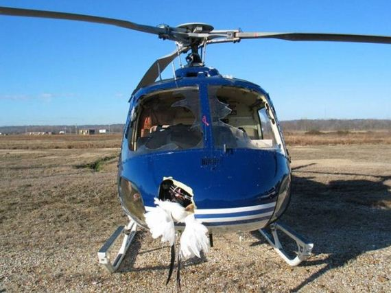 helicopter_bird