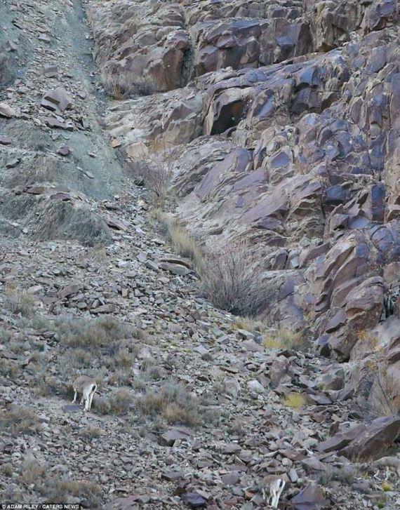 hidden-leopard