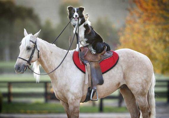 ιππασία-dog