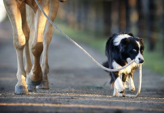 horseriding-dog