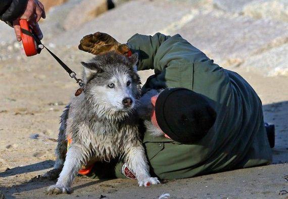 husky_rescue