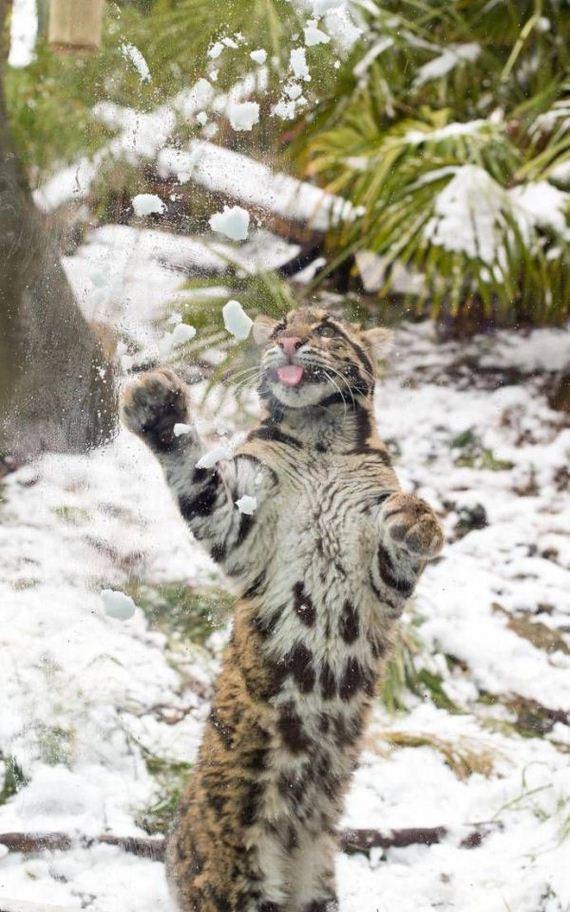 leopard_01