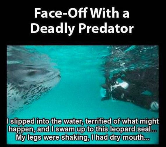 leopard_seal_tries_to_teach_photographer