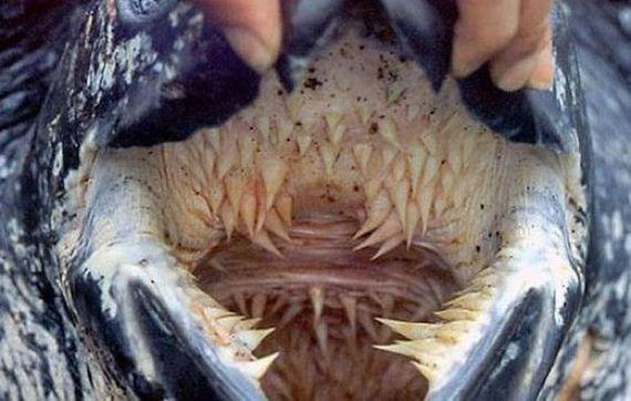 letherback_turtle