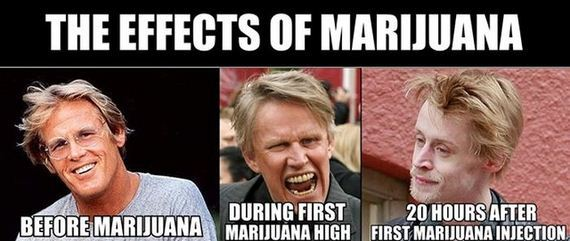 marijuana_disinformation_finest